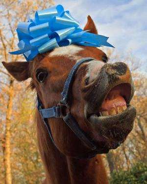 Dont_Look_a_gift_horse_in_the_mouth