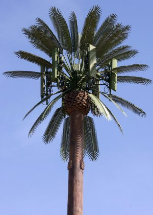 Palm-Tree-Cell-Tower